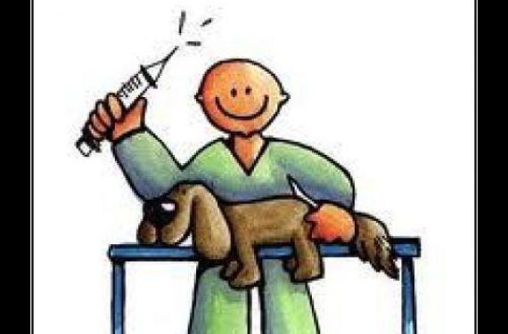 Veterinario curando a un perro